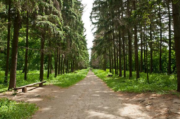 краснокутский дендропарк, куда поехать на выходные в Украине