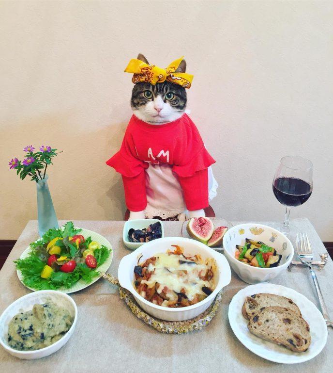 японка наряжает кота на ужин