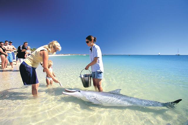 Monkey Mia, северная австралия пляж манки миа, пляж манки миа, пляж где кормят дельфинов