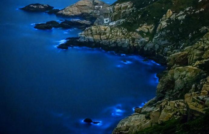 Светящийся планктон,Где можно увидеть светящийся пляж,куда поехать на выходные, Светящиеся динофлагелляты, светящиеся берега, светящийся берег
