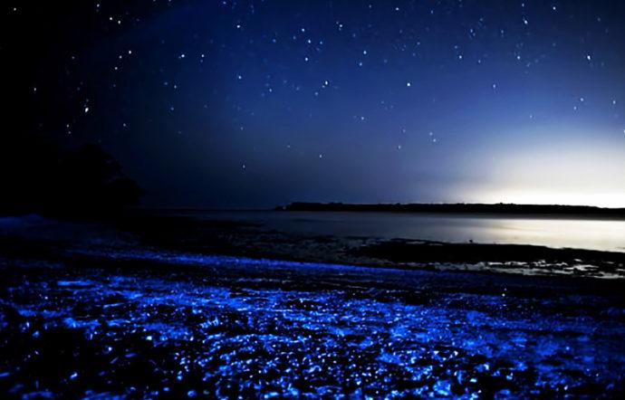 Светящийся планктон,Где можно увидеть светящийся пляж, Светящиеся динофлагелляты,куда поехать на выходные, светящиеся берега, светящийся берег