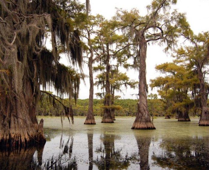 кипарисы озера Каддо, озеро Каддо,, куда поехать на выходные