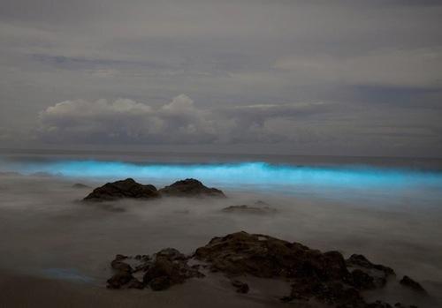 Светящийся планктон,Где можно увидеть светящийся пляж, Светящиеся динофлагелляты, куда поехать на выходные,светящиеся берега, светящийся берег