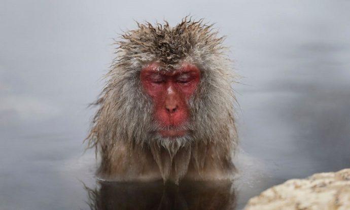 парк Джигокудани, парк снежных обезьян,, куда поехать на выходные в японии, куда поехать на выходные,