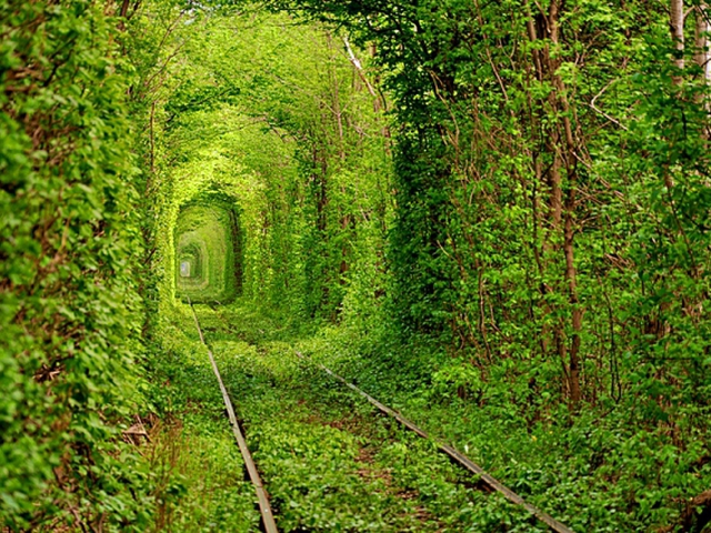 тоннель любви,тоннель любви в разное время года,тоннель любви куда поехать на выходные, куда поехать на выходные украина, куда поехать на выходные Ровны