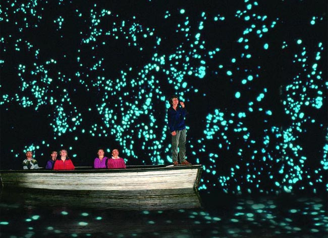 Пещеры Вайтомо (Waitomo Caves),Пещеры Вайтомо Новая Зеландия, куда поехать на выходные в Новой Зеландии, достопримечательности Новой Зеландии, как добраться пещеры Вайтомо
