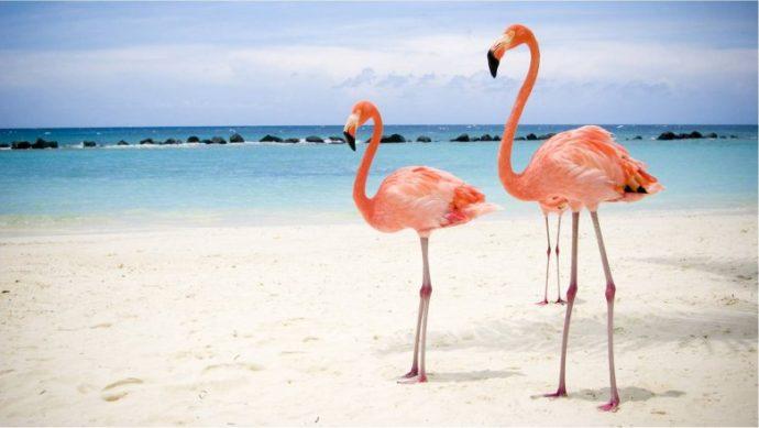 куда поехать на выходные аруба, куда поехать на выходные пляж розовых фламинго, пляж розовых фламинго фото, где пляж розовых фламинго, куда слетать на выходные