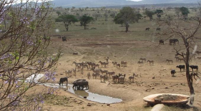 куда поехать на выходные в Африку, куда слетать на выходные в Африку, интересные места в Африке, отель с водопоем для животных, отель где можно увидеть животных, необычный отель, лучший отель