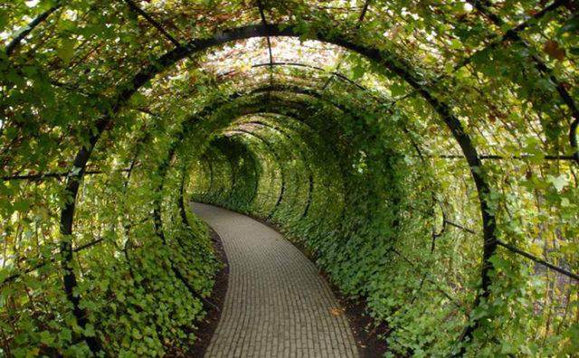 замок алник англия, куда поехать на выходные в Европе, куда слетать на выходные в Европу, интересные места Европы, куда поехать на выходные в Англии, сад ядовитых растений