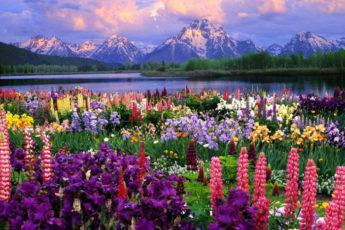 нанда деви индия,нанда деви индия как добраться, куда поехать на выходные в Индии, куда поехать на выходные в Европу, долина цветов Индия как добраться