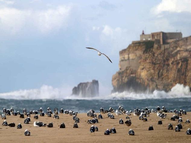 самые лучшие пляжи в Португалии, пляжный отдых в Португалии, лучшие пляжи в Алгерве,Прайа-де-Роша пляж Португалии, Алгарва-самые красивые пляжи Португалии, псчаные пляжи Португалии, куда поехать на отдых в Португалии, интересные места Европы, куда поехать на выходные в Европу