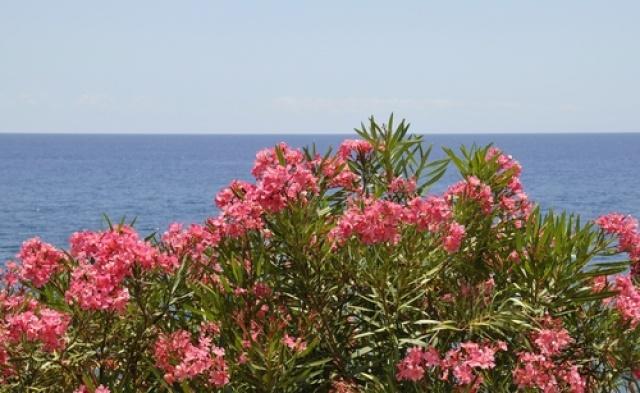 Анфестирия на Кипре, Праздник цветов на Кипре, отдых весной на Кипре, отдых в мае на Кипре, куда поехать на выходные на Кипре,отпуск на Кипре, что посмотреть на Кипре